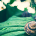 Scientific Skincare - What Is Snail Mucin: The Benefits Of Snail Mucin In Skincare